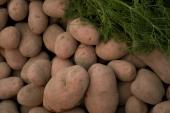 Diseñan un sistema de visión hiperespectral para garantizar la calidad de la patata