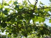 ITG y Vigosoft se alían para dotar de tecnología innovadora al sector vitivinícola gallego