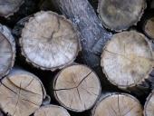 Comunicación inteligente para mejorar la gestión forestal
