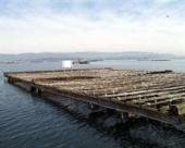 Investigadores gallegos y catalanes desarrollan un sistema para predecir mareas rojas