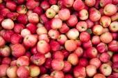 Crean una innovadora tecnología capaz de clasificar la fruta según su calidad mediante sensores automáticos