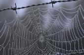 Investigadores japoneses desarrollan una innovadora seda híbrida a partir de genes de telaraña