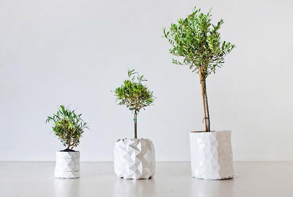 Inventan una maceta que crece al ritmo de las plantas for Varias plantas en una maceta