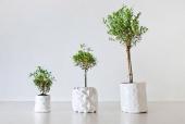 Inventan una maceta que crece al ritmo de las plantas
