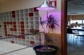 Una empresa gallega crea un sistema para plantas de interior que logra simular la luz natural usando energía renovable