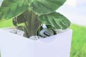Inventan una maceta que produce energía mediante la fotosíntesis